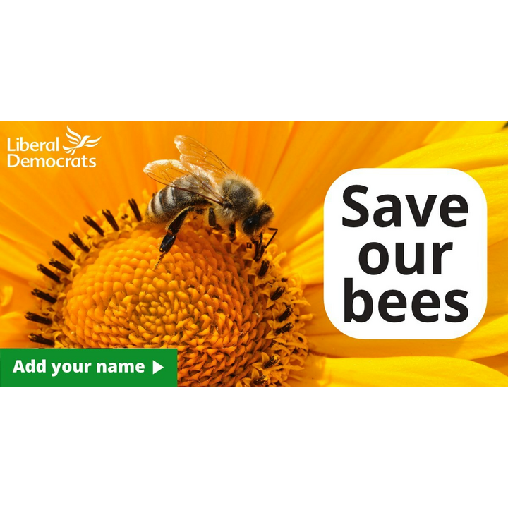 Bees Petition Photo